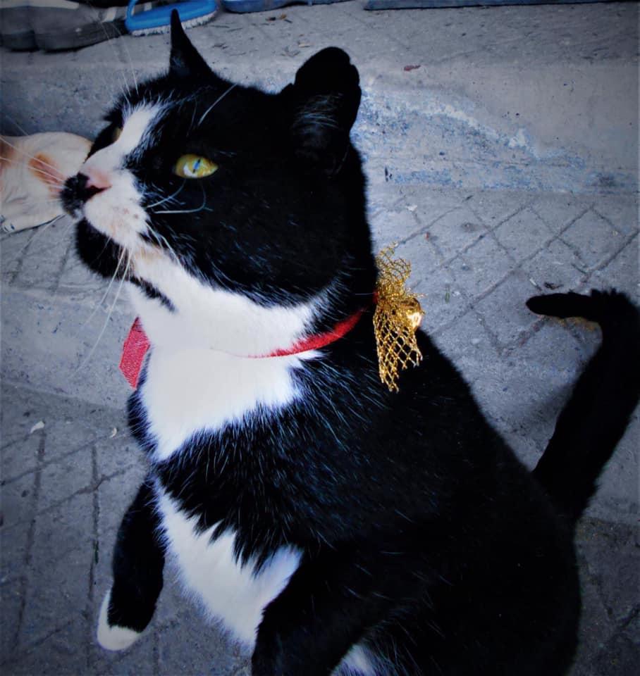 pisica disparuta